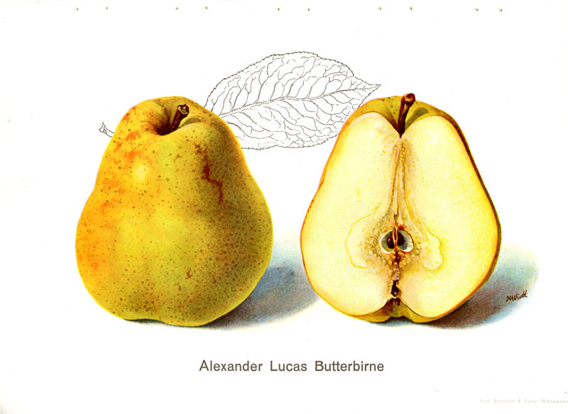 was ist pear